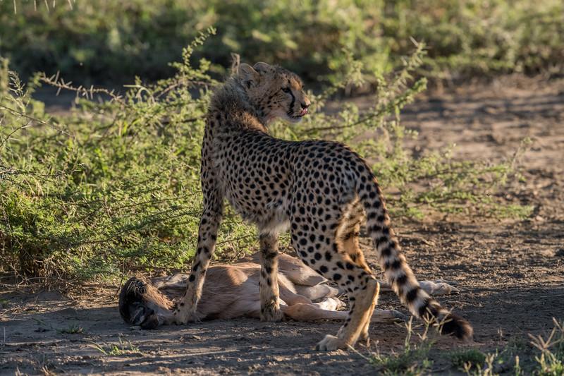 Tanzania_Feb_2018-153.jpg