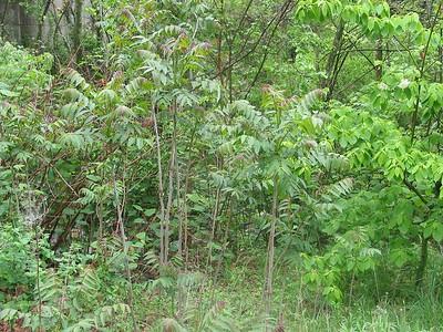 RT 50  4Mile Run Plant Photo Gallery