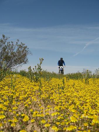 04-18 ADV Mojave area