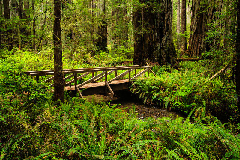 Footbridge Redwoods National Park, CA 行人橋 加州紅木國家公園
