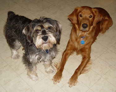 Troy's Dusty and Lucky