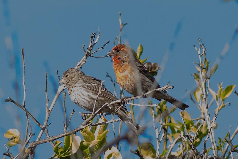 2birds-0011.jpg