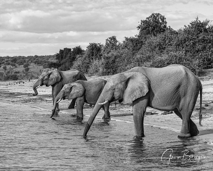 Elephants Botswana-6.jpg
