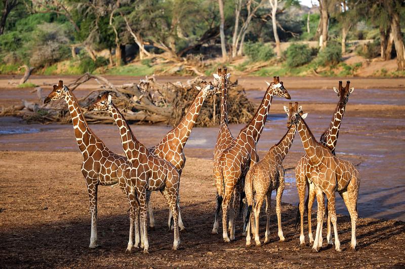 Kenya 2015-00209.jpg