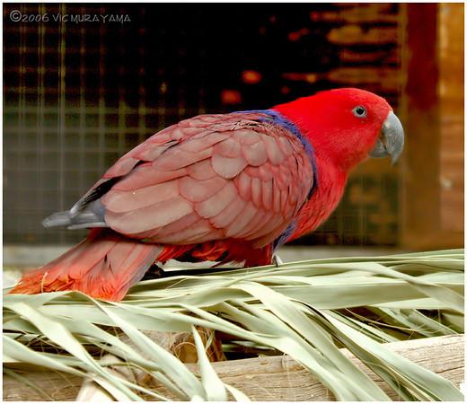 Wildlife World Zoo Birds