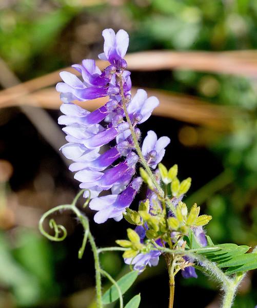 Mystery purple flower