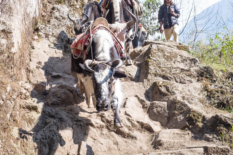 Nepal 118(20150411-DSCF1710)