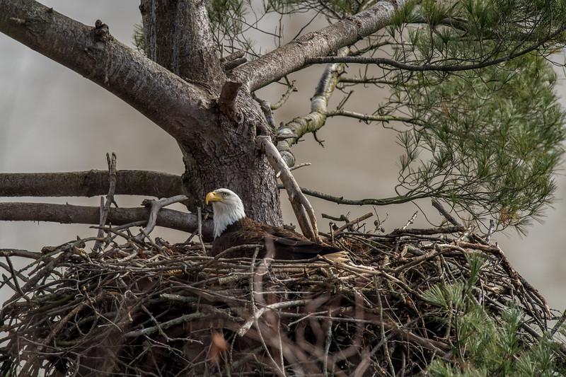 ulster-eagle-166.jpg