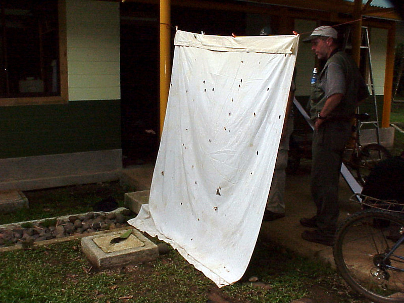 Butterfly and Moth Collector at La Selva Costa Rica 2-11-03 (50898077)