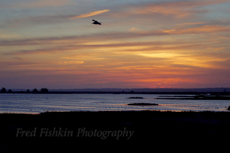 sunset gull.jpg