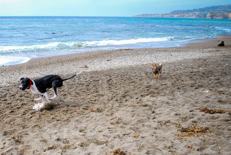 dogs_beach-047.jpg