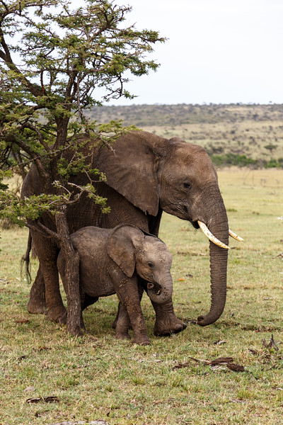 Kenya 2015-10271.jpg