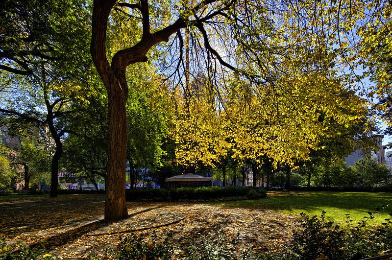 NYC Park Fall Tree.jpg
