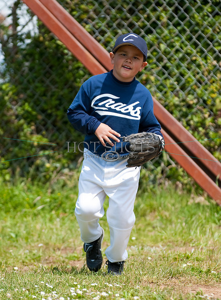 TBall Division
