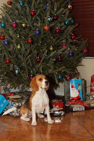 Christmas Brody