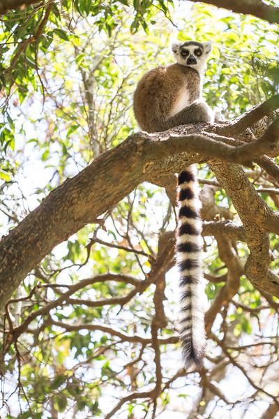 Madagascar_2013_FH0T0930_1.jpg