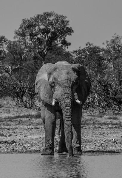 Botswana_June_2017 (1929 of 6179).jpg