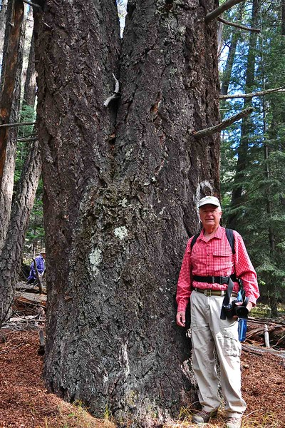 Old Growth Forest and Willy White Trail