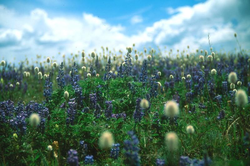 amh FLOWERS (1094).jpg