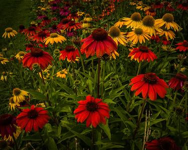 Cantigny Summer Flowers
