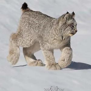 Little Gatos but look big