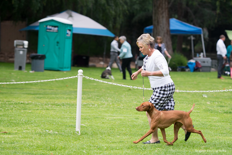 2019 Pasadena Kennel Club-8029.jpg