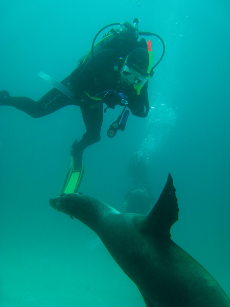 Diving in the Galapagos (114 of 392)