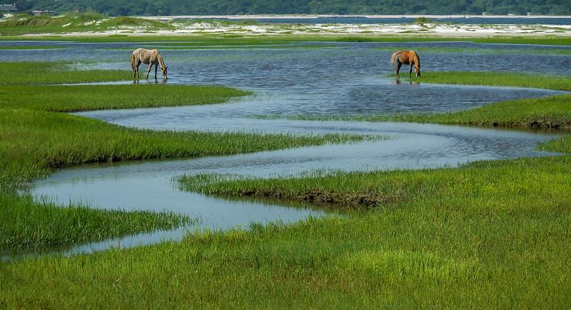 Wild Horses and Salt Marsh Tidal Creek