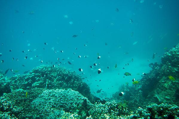 Man under the sea
