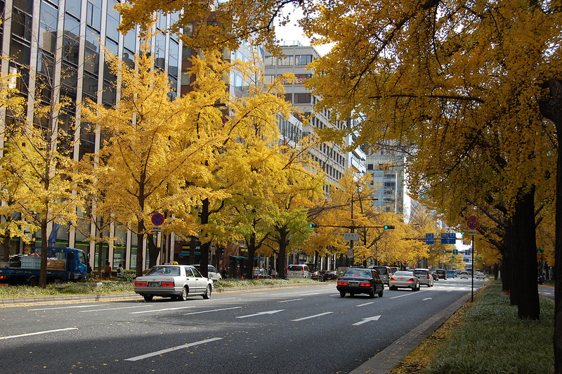Ginko trees in Autumn on Midosuji Boulevard