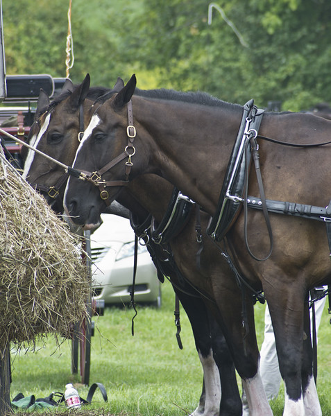 horseshow2-bobg_16_20141019_2084924046.jpg