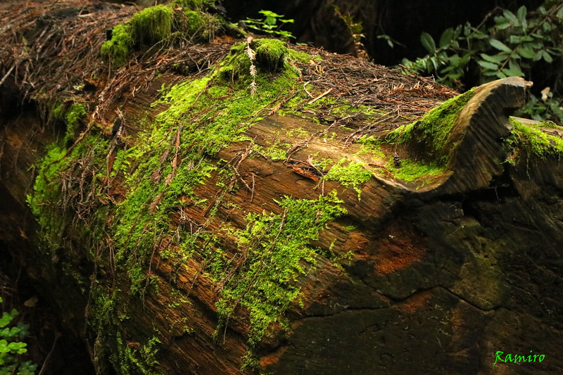 Muir Woods IMG_3901.jpg