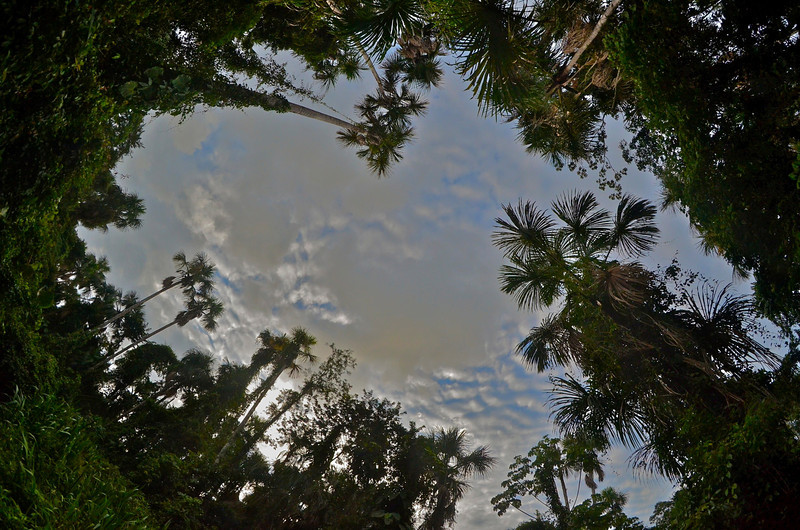 View from the forest, Yasuni National Park