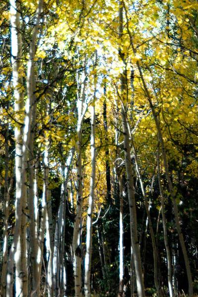 Colorful Colorado 2009