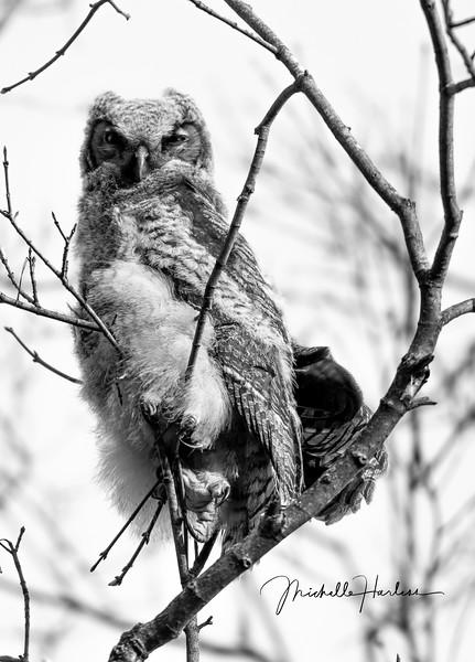 Eagle (1 of 1)-5.jpg