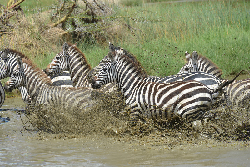 East Africa Safari 340.jpg