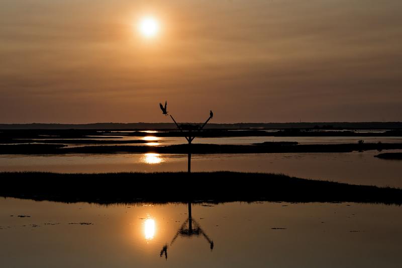 Osprey-sunset1_DSC0780-Edit.jpg