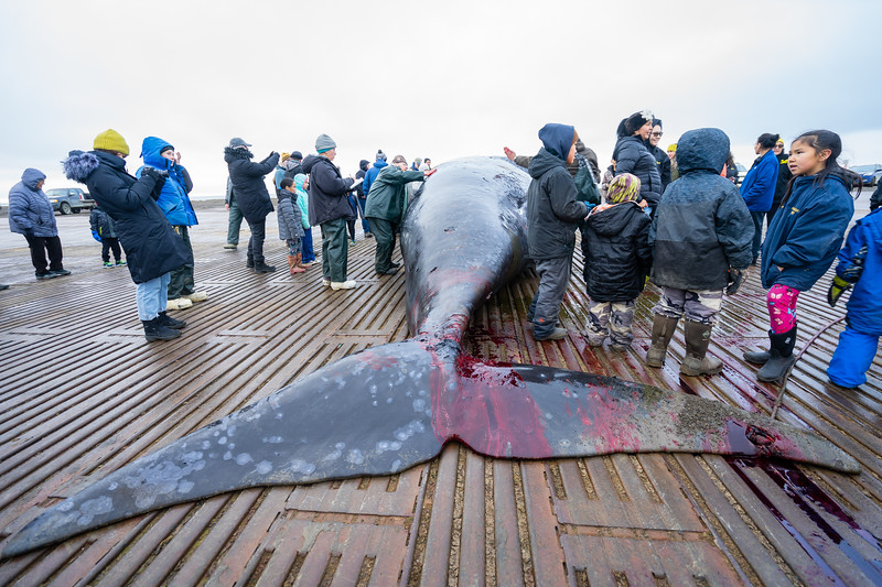Utqiagvik Whaling-7033-Juno Kim-nw.jpg