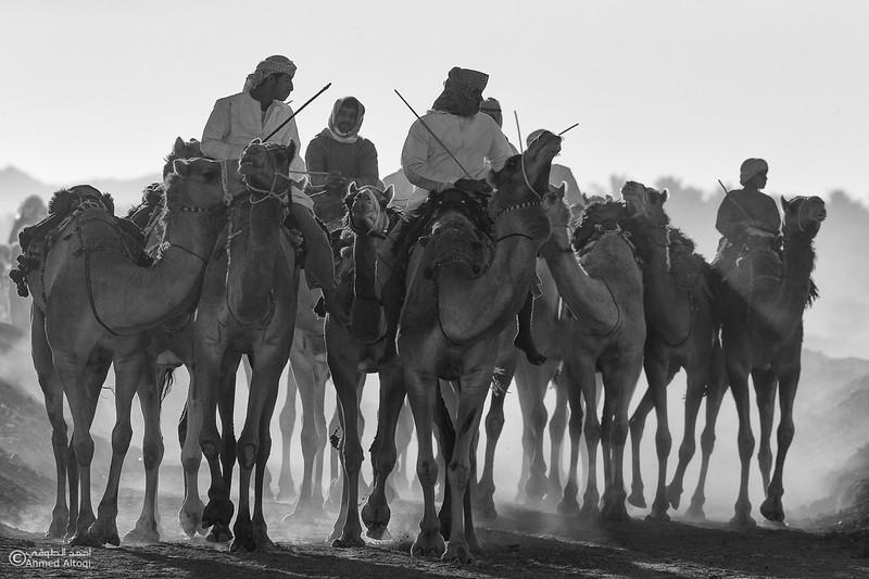 IMGL880121-camels- B&W.jpg