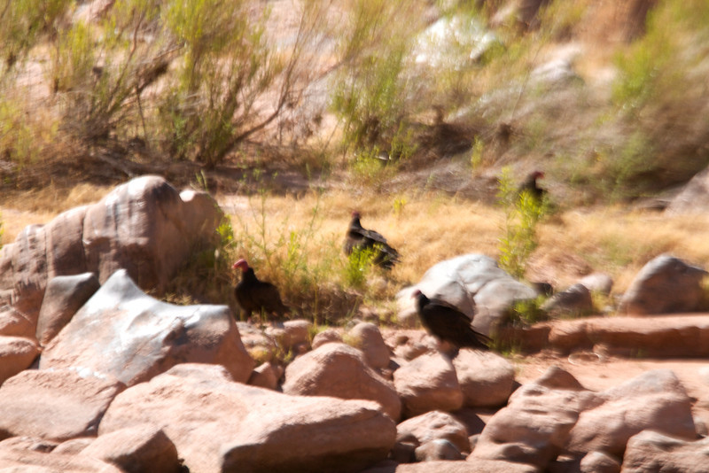 2014_Grand_Canyon_WHDW2_7D 56