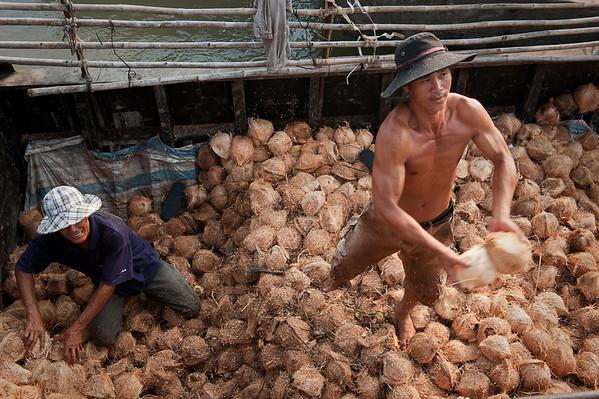 Coconut Stories
