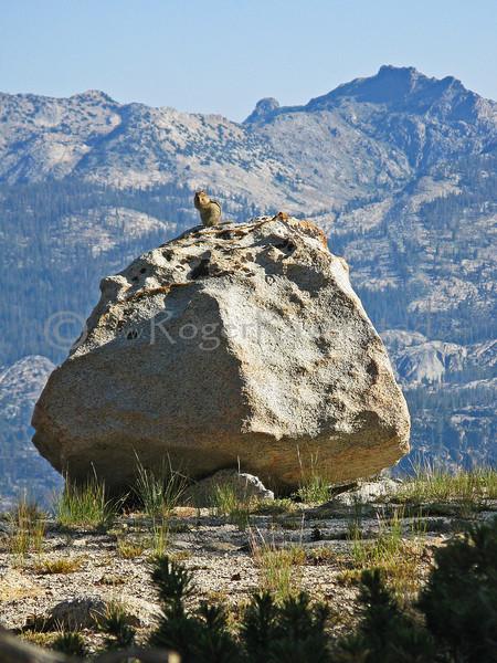 Yosemite:  Ten Lakes and Tuolumne Peak 2009