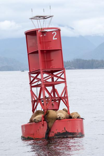 Alaska 2015 - Sitka -  072515-334.jpg