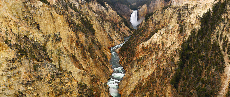 Artisan Gold - Grand Canyon of the Yellowstone (Yellowstone National Park)