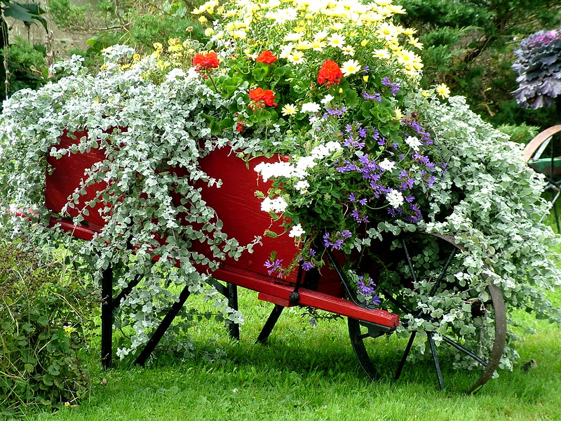 floral wheelbarrel Nova Scotia 233.JPG