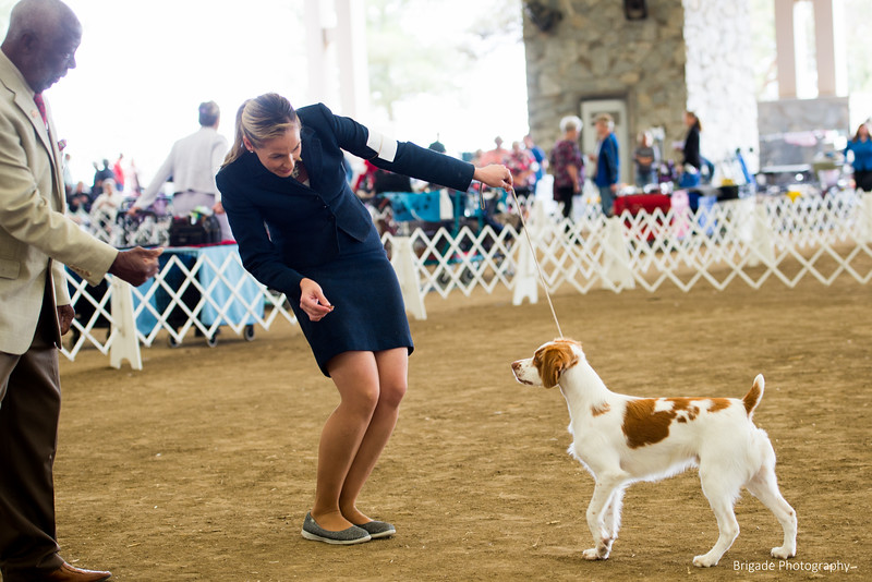 2019 Malibu Kennel Club-9690.jpg