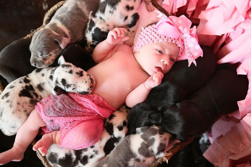 PEP-Feb7-Puppies-8436.jpg