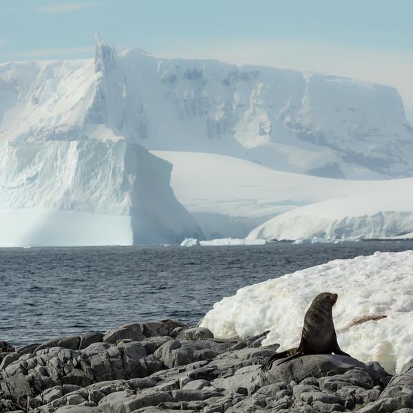 2019_01_Antarktis_05841.jpg