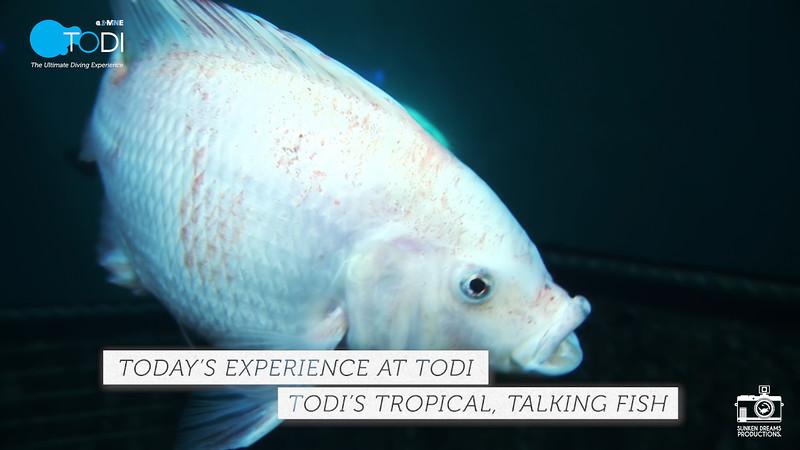 "TODI TODAY: TODI's Tropical, Talking Fish - Season 1 Episode 1: ""Positions everyone!"""