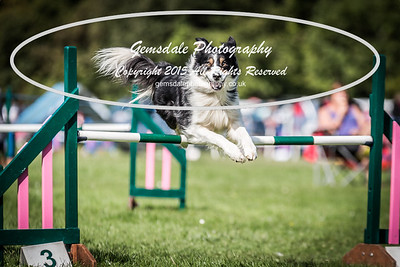 South Downs Agility